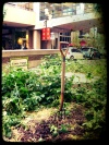 community gardens in Calgary: Downtown Calgary