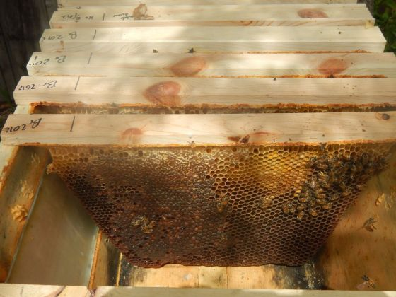 Comb with honey from last year