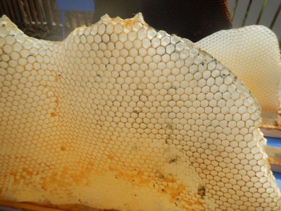 Some mould on an empty comb that we pulled out of the hive